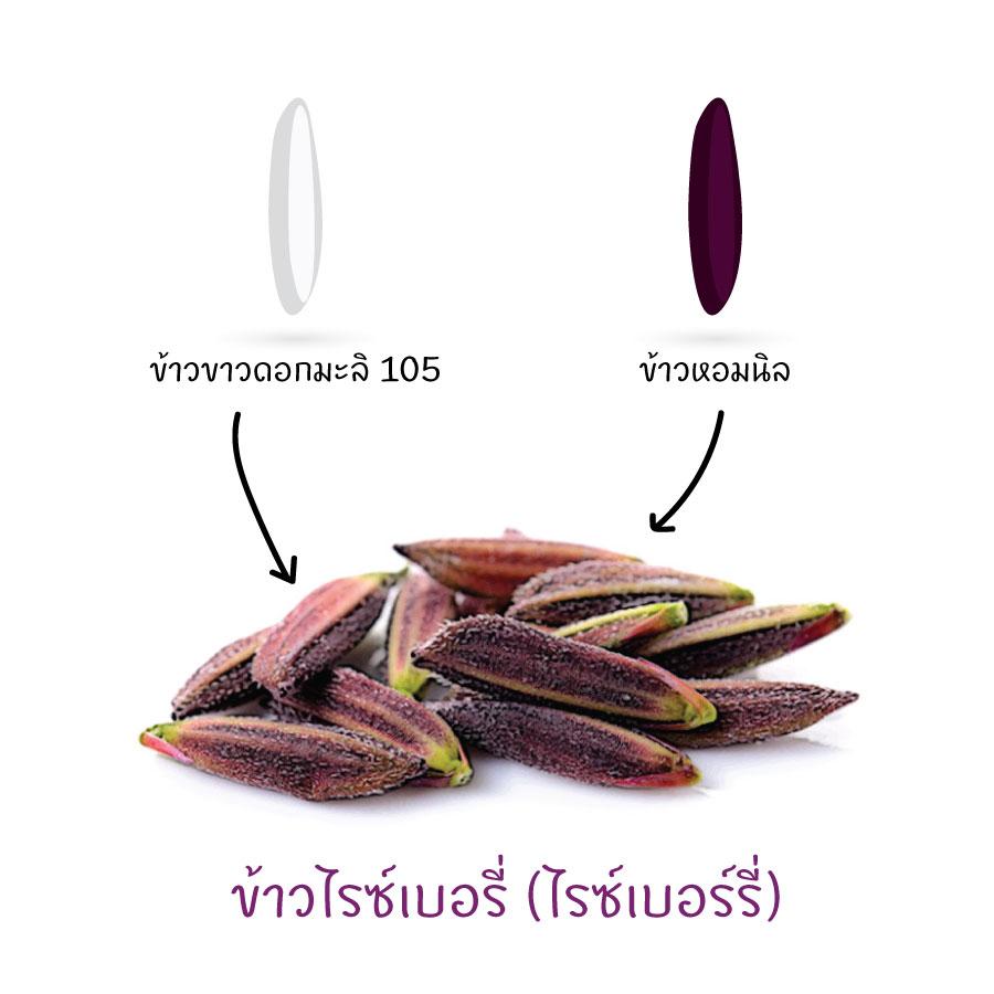 ข้าวหอมมะลิ ข้าวไทย